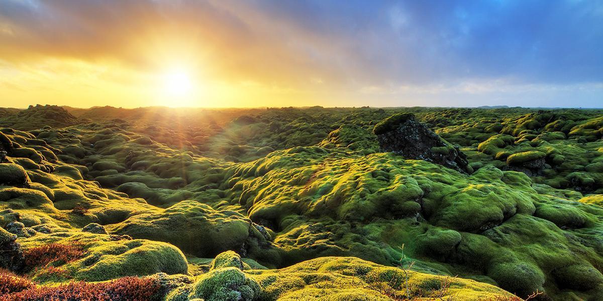 BILFERIE PÅ ISLAND_Bilferien Reykjavik og Sørkysten av Island_Islandsk myk mose © Din Islandsreise